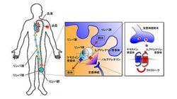 大阪大の准教授ら「病は気から」の一端を分子レベルで実証