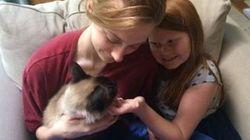 ハワイの迷子猫は1年半後、ミシガンの家族と再会できた。運命を分けたのは...(動画)