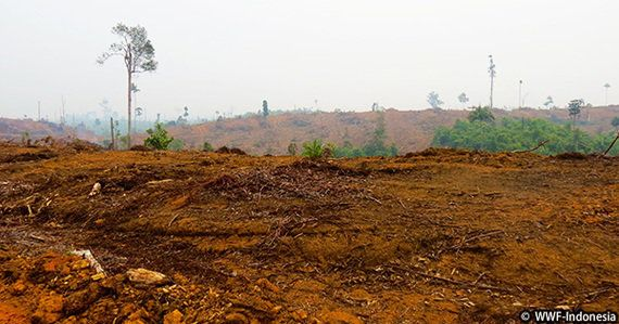 APP社の「森林保護方針」実施状況の評価報告書が発表