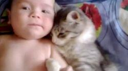 猫、赤ちゃんが大好きなの。(動画)