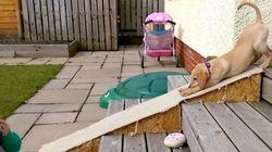 【きゅーん】子犬、スロープで遊ぶとこうなる(動画)