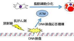 DNA損傷修復の異常が糖尿病の一因