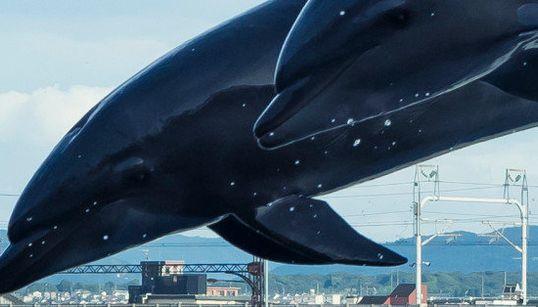 イルカが緑の丘に飛んだよ。合成写真じゃないよ(画像)