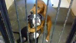 この犬たちは処分される運命だった。しかし、一つの「絆」が全てを変えた