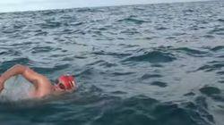 遠泳スイマーをサメから救ったイルカたち【動画】
