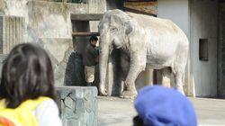 動物園から姿を消すゾウ、未来の子どもたちは国内で見られない可能性も