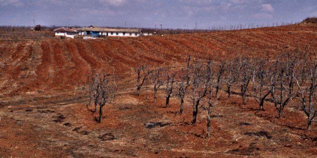 NAMPO, SOUTH PYONGAN, NORTH KOREA - 1995/01/01: Arid farmland to the west of the North Korean capital...