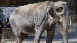 「はな子」死す、69歳 戦後初めて日本に来たアジアゾウ