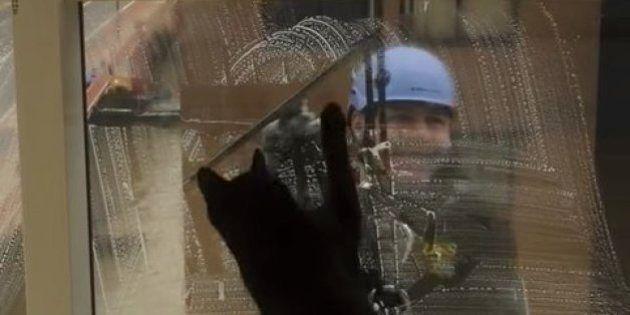 猫のギネスは窓拭きおじさんがだーいすき(動画)