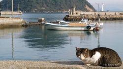 猫の見られるストリートビュー、瀬戸内の猫島・佐柳島もそうでした