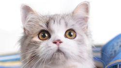 大地震の際、飼い猫をどう避難させる?
