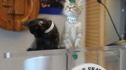 子猫に支配されたシアトル市役所 一体、どういうこと?