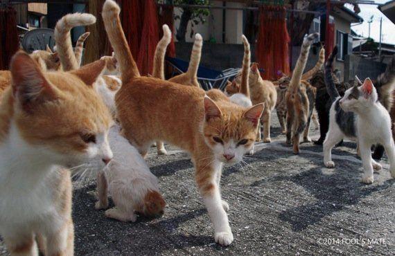 愛媛の猫島「青島」写真集、収益の一部は猫島の環境整備に