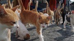 愛媛の猫の楽園「青島」写真集、収益の一部は猫島の環境整備に