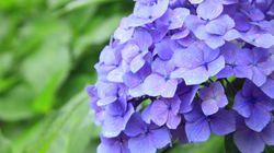 梅雨入りは遅め、初夏の陽気を満喫 3か月予報