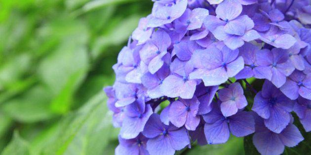 梅雨入りは遅め、初夏の陽気を満喫 3か月予報(安西浩子)