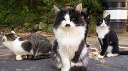 猫島・田代島の猫、ストリートビューでいつでも見られることが判明