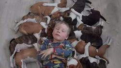 16匹の子犬たちと暮らすとどうなるの?