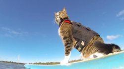 この猫はサーフィンもスケートボードもする 大切な使命があるから