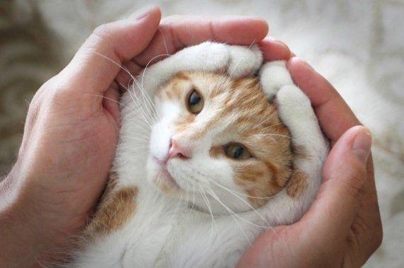 猫の魅力を、無限大にアップさせるポーズが発見される