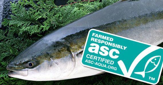 ブリ・スギ類の持続可能な養殖に向けて ASC基準が完成