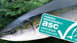ブリ・スギ類の養殖のための新基準が完成 持続可能性と海洋環境保全が目的