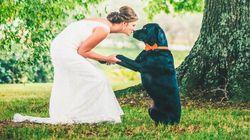 結婚式、大好きな動物たちと一緒にお祝いしました(画像集)