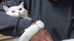 猫、飼い主をぎゅっと抱きしめて離さない。(動画)