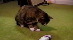 猫がビックリすると、とんでもない動きを見せる(動画)