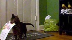 郵便局員を待ち伏せる猫、誰よりも早く手紙を受け取りドヤ顔をキメる