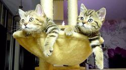 [面白ネコ動画]スクラッチするネコ、風呂おけに落ちて驚くネコなど