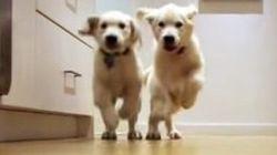 2匹のわんこ、ごはんに向かって猛ダッシュ(タイムラプス動画)