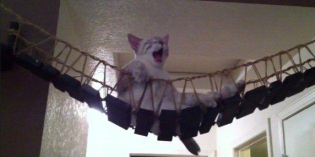 動画で見る「インディ・ジョーンズの吊り橋」に乗る猫、全力でダメモードに