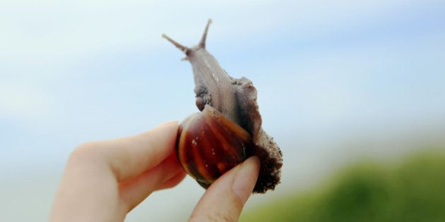 Girl in the hands of a snail