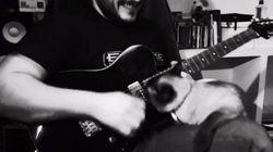 猫と戦うギター弾き、しぶとい猫に完敗