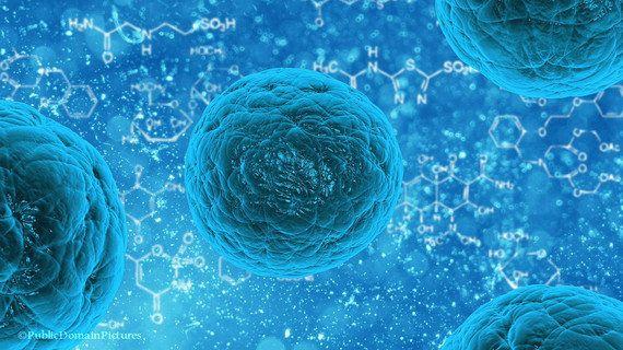 幹細胞とは何か?(3)「胚」からつくられる「ES細胞」