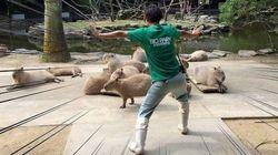 「ジュラシック・ワールド」のシーンを、世界中の動物園が真似してみた(画像集)