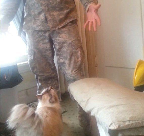 兵役帰りの飼い主の帰宅を待つ猫、渾身のジャンプで出迎える