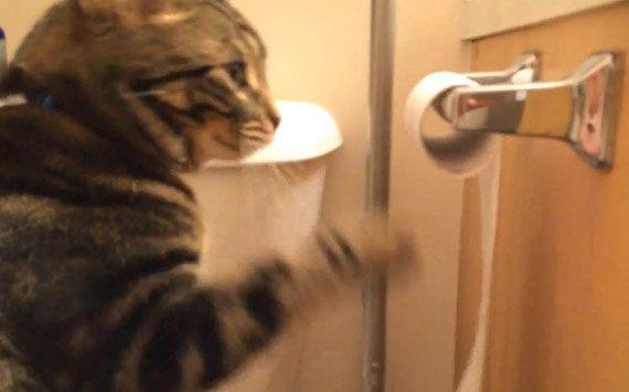 トイレットペーパーを回す猫、完全犯罪をほぼ達成する