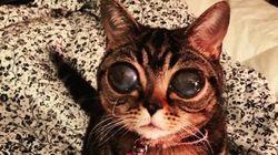 宇宙人のような猫がいた。吸い込まれそうなマチルダの瞳(動画・画像)