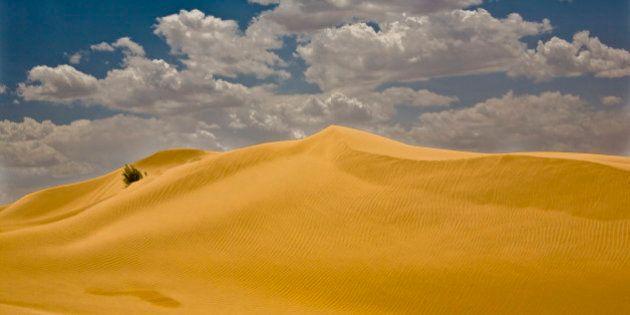 庫布其(クブチ)砂漠と生態系の復元