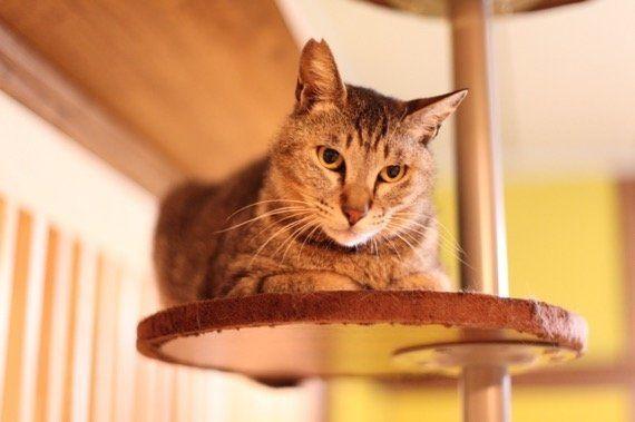 人生を共にする猫と出会える、保護猫カフェ「ネコリパブリック東京」訪問記