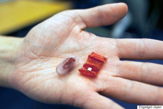 コイン型電池を飲み込んじゃった→東工大ら、排出する「マイクロロボット」を開発