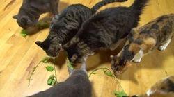 無言で集まる6匹の猫、ほぼ無言のままパーティタイムに