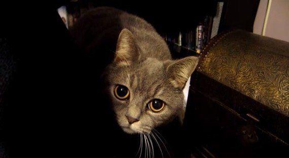 シャイな猫の子カメラを向けりゃ、映しちゃいやよと見切れ芸