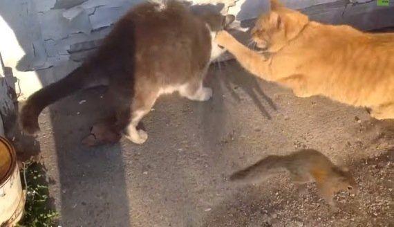 茶猫の後ろにいたハチワレ猫、なぜか子リスに濡れ衣を着せられる