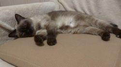高反発マットで眠る猫、気持ちよすぎて高いびき
