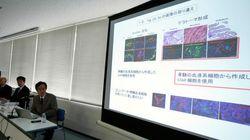 STAP問題が照らし出した日本の医学生物学研究の構造的問題