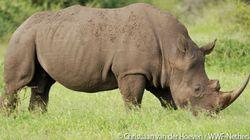 南アフリカでのサイ密猟が前年を上回る