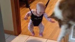 ワンコが赤ちゃんにジャンプを教えてる。本当だってば(動画)
